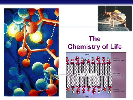AP Biology 2007-2008 The Chemistry of Life AP Biology Why are we studying chemistry? Chemistry is the foundation of Biology.