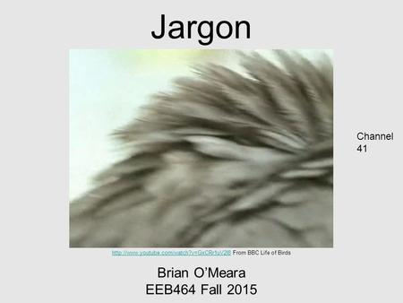 Jargon Brian O'Meara EEB464 Fall 2015  From BBC Life of Birds Channel.