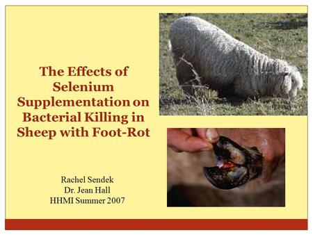 The Effects of Selenium Supplementation on Bacterial Killing in Sheep with Foot-Rot Rachel Sendek Dr. Jean Hall HHMI Summer 2007.
