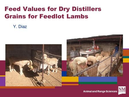 Animal and Range Sciences Feed Values for Dry Distillers Grains for Feedlot Lambs Y. Diaz.