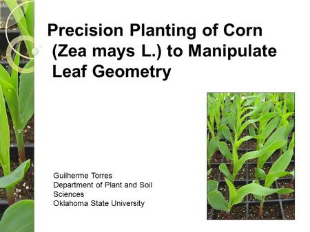 Precision Planting of Corn (Zea mays L.) to Manipulate Leaf Geometry Guilherme Torres Department of Plant and Soil Sciences Oklahoma State University.