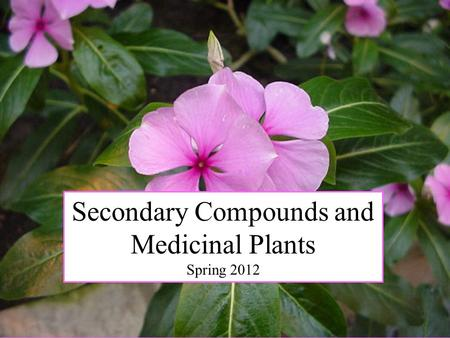 Secondary Compounds and Medicinal Plants Spring 2012.