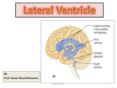 By Prof. Saeed Abuel Makarem 1Prof. Makarem. BRAIN VENTRICLES The brain is bathed by the cerebrospinal fluid (CSF) Inside the brain, there are spaces.
