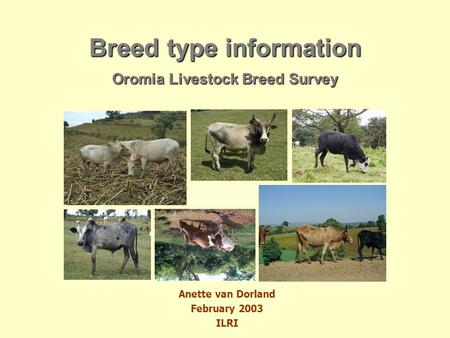 Anette van Dorland February 2003 ILRI Breed type information Oromia Livestock Breed Survey.