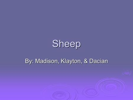 Sheep By: Madison, Klayton, & Dacian. Domara  Color: black, white, tan and red.  Size: tall in shoulders & it's body is long and oval.  Distinguishing.