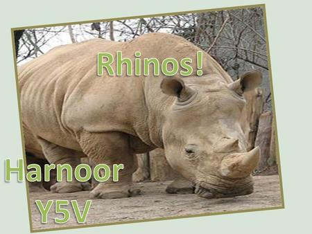 Save the wonderful rhinos, before it is too late! They need help from humans! They can NOT help themselves!