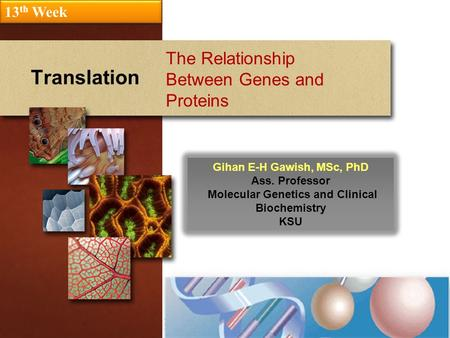 Translation The Relationship Between Genes and Proteins 13 th Week Gihan E-H Gawish, MSc, PhD Ass. Professor Molecular Genetics and Clinical Biochemistry.
