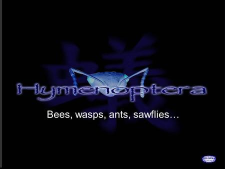 Bees, wasps, ants, sawflies…. HYMENOPTERA Hymen: membrane Ptera: wings Complete Chewing.