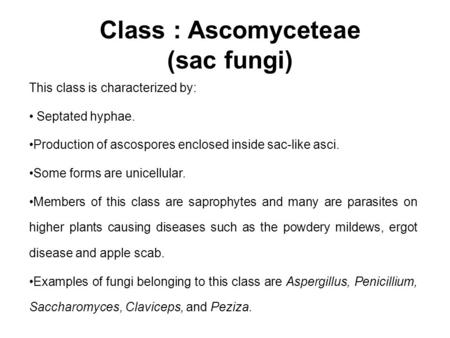 Class : Ascomyceteae (sac fungi) This class is characterized by: Septated hyphae. Production of ascospores enclosed inside sac-like asci. Some forms are.