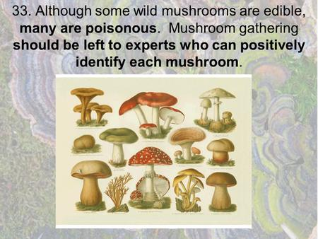33. Although some wild mushrooms are edible, many are poisonous. Mushroom gathering should be left to experts who can positively identify each mushroom.