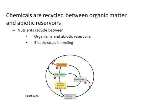 Chemicals are recycled between organic matter and abiotic reservoirs