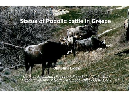 Status of Podolic cattle in Greece Christina Ligda National Agricultural Research Foundation, Agricultural Research Centre of Northern Greece, Greek Gene.