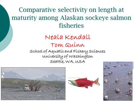 Comparative selectivity on length at maturity among Alaskan sockeye salmon fisheries Neala Kendall Tom Quinn School of Aquatic and Fishery Sciences University.