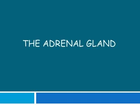 The Adrenal Gland.