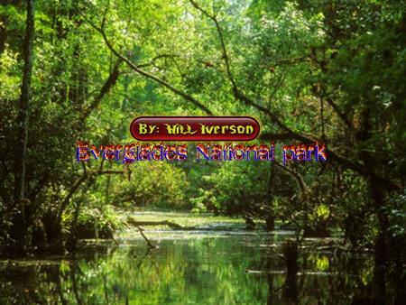 BY: WILL IVERSON. What Year Was The Everglades Made a National Park The Everglades national park was made a national park on december 5 th 1947.