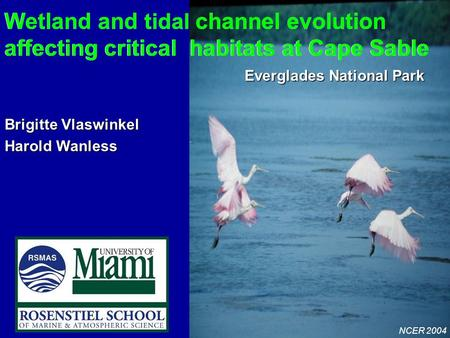 NCER 2004 Wetland and tidal channel evolution affecting critical habitats at Cape Sable Everglades National Park Wetland and tidal channel evolution affecting.