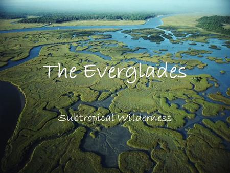 The Everglades Subtropical Wilderness. Where are the Everglades? Located on the Southern coast of Florida,USA.