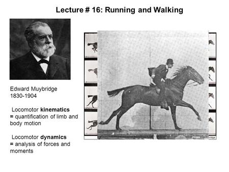 Edward Muybridge 1830-1904 Locomotor kinematics = quantification of limb and body motion Locomotor dynamics = analysis of forces and moments Lecture #