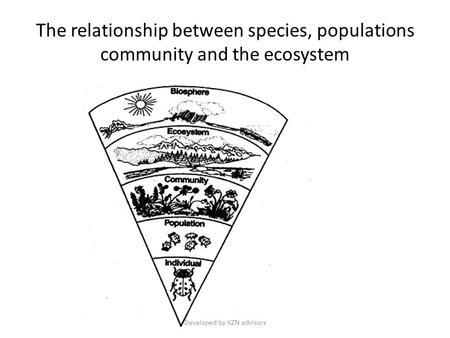 The relationship between species, populations community and the ecosystem Developed by KZN advisors.