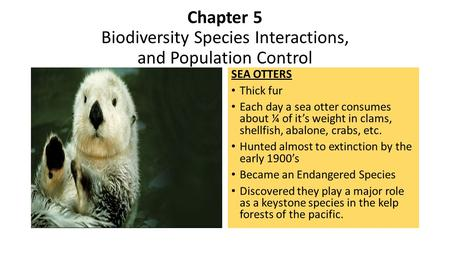 Chapter 5 Biodiversity Species Interactions, and Population Control SEA OTTERS Thick fur Each day a sea otter consumes about ¼ of it's weight in clams,