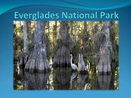 Location Located in Florida, USA. Everglades City 3 rd largest park in USA.