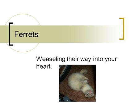 Weaseling their way into your heart.