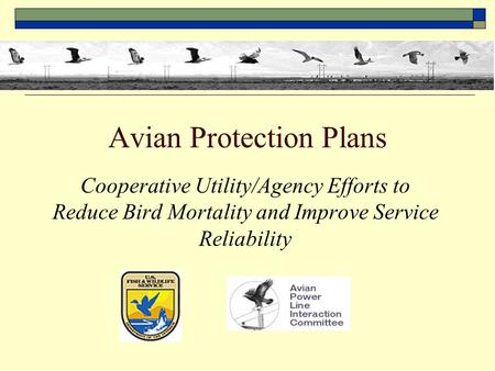 Avian Protection Plans Cooperative Utility/Agency Efforts to Reduce Bird Mortality and Improve Service Reliability.