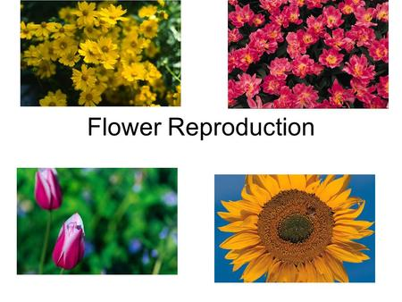 Flower Reproduction. Purpose Site of sexual reproduction.