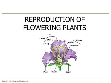 Copyright © 2009 Pearson Education, Inc. REPRODUCTION OF FLOWERING PLANTS.