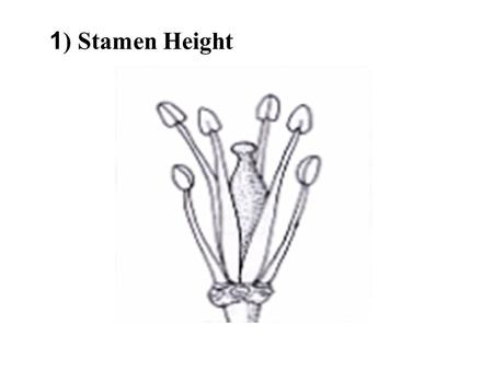 1 ) Stamen Height. 2) Corolla Symmetry 3) Term for Stamen Stalk.