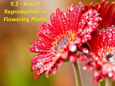1 9.2 - Sexual Reproduction in Flowering Plants. At the end of this lesson, students should be able to : a.Overview a typical life cycle of flowering.