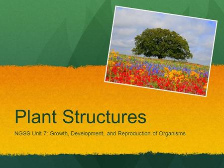 Plant Structures NGSS Unit 7: Growth, Development, and Reproduction of Organisms.