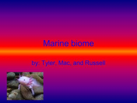 Marine biome by: Tyler, Mac, and Russell Marine animal list Sharks Whales Dolphins Seals Different kinds of fish Sea Otters Mollusks Eels Turtles.