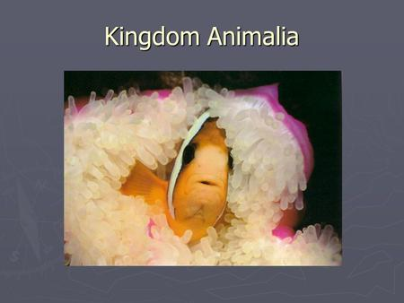 Kingdom Animalia. Review! ► Kingdom ► Phylum ► Class ► Order ► Family ► Genus ► Species.