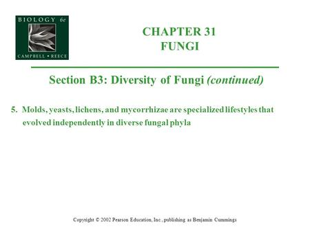 CHAPTER 31 FUNGI Copyright © 2002 Pearson Education, Inc., publishing as Benjamin Cummings Section B3: Diversity of Fungi (continued) 5. Molds, yeasts,