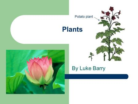 Plants By Luke Barry Potato plant. What I am finding out… How plants can be classified. The main parts of a flowering plant. Examples of flowering plants.