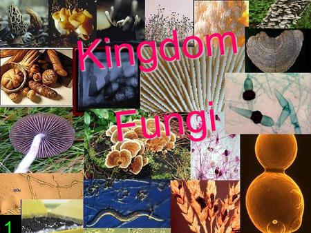 KingdomFungi 1. Fungi are important decomposers in the environment 3.