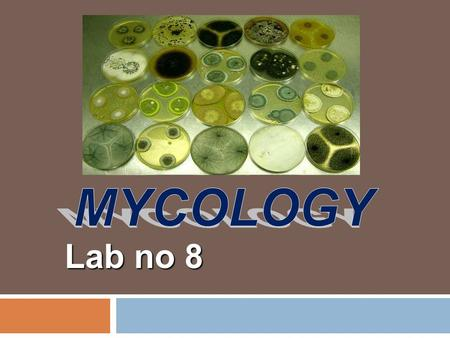 Lab no 8 Definition:  Fungi are eukaryotic organisms and include the yeasts, fleshy fungi & molds which include dimorphic fungi.  Yeasts are microscopic,