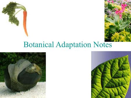 Botanical Adaptation Notes. Introduction: What is an adaptation? Characteristic that helps organism survive Why adapt? Increase reproductive fitness (#