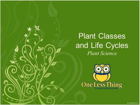 Plant Classes and Life Cycles Plant Science. Classification of Plants Four Major Groups 1.gymnosperms 2.angiosperms 3.mosses 4.ferns 2www.OneLessThing.net.