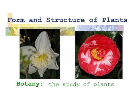 Form and Structure of Plants Botany: the study of plants.