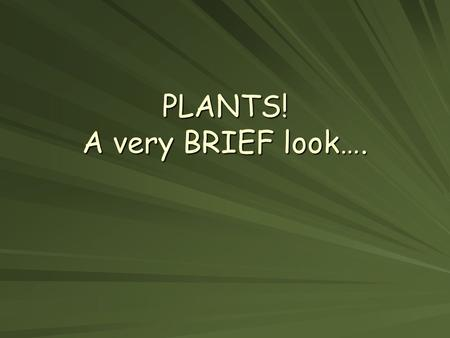 PLANTS! A very BRIEF look….. Question 1: What's the difference between these MONOCOTS: –Have one seed leaf or a cotyledons –Smaller group DICOTS: –Have.