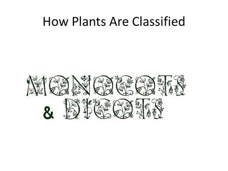 How Plants Are Classified. Essential Question What are the main ways scientists classify plants? ?