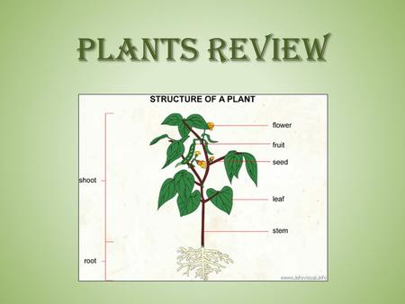 PLANTS REVIEW. Plants Review - #1 When a plant begins the process of germination, describe what it is doing. – The germinating plant is starting to sprout.