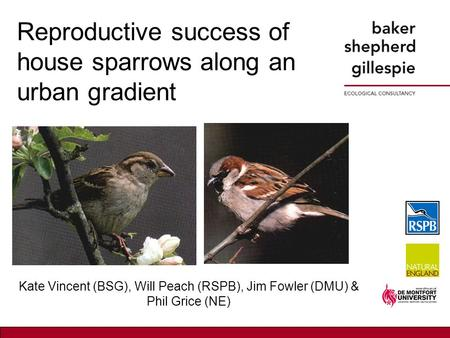 Reproductive success of house sparrows along an urban gradient Kate Vincent (BSG), Will Peach (RSPB), Jim Fowler (DMU) & Phil Grice (NE)