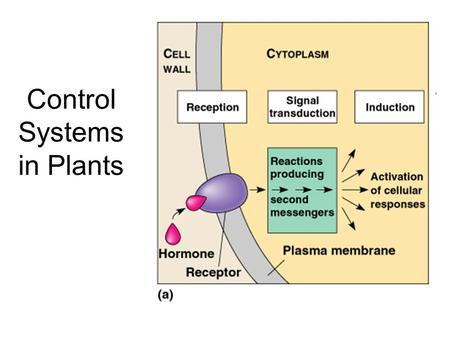 Control Systems in Plants. Etioloation and De- etiolation.
