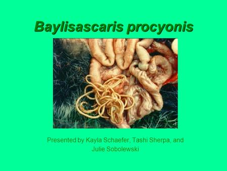 Baylisascaris procyonis Presented by Kayla Schaefer, Tashi Sherpa, and Julie Sobolewski.