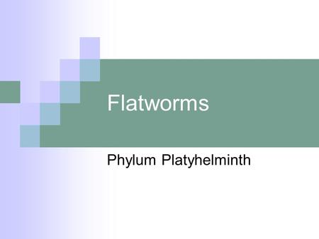 Flatworms Phylum Platyhelminth.