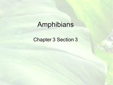 Amphibians Chapter 3 Section 3 Vocab Words Amphibios Hibernation Estivation Metamorphosis Anura Caudata Apoda Tympanic Membrane Biological Indicators.