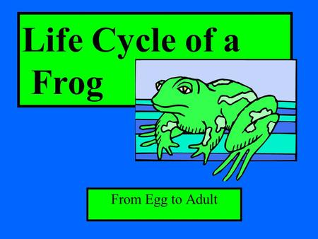 Life Cycle of a Frog From Egg to Adult.